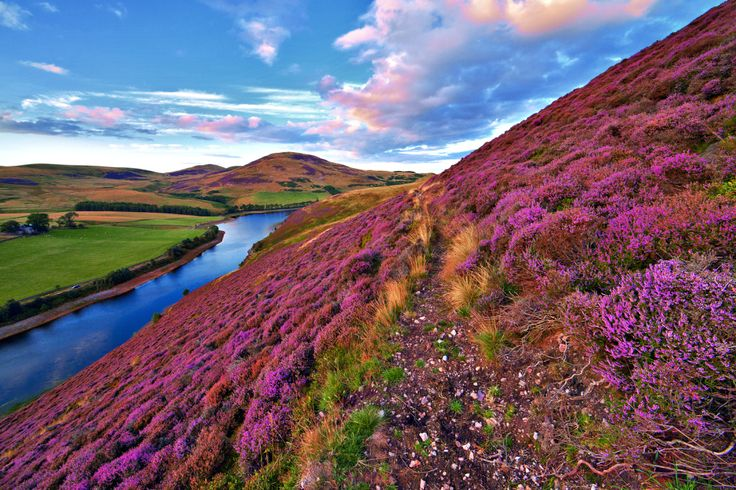 Vivid colorful landscape scenery with a footpath through the hill covered by violet heather flowers and green valley river mountains Pentland hills near Edinburgh Scotland