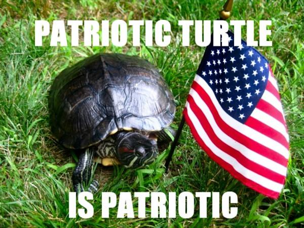 patriotic_turtle.jpg