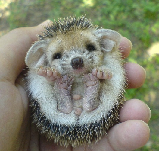 hedgehoggy goodness.jpg