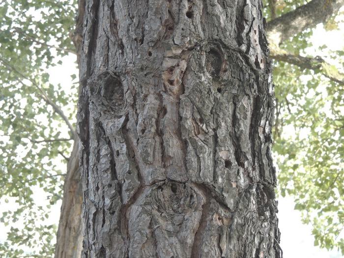sad tree.jpg