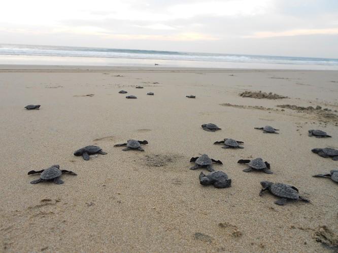 baby-loggerhead-sea-turtles.jpg