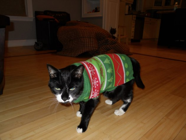 Cat-Hates-Christmas-Sweater-800x600.jpg