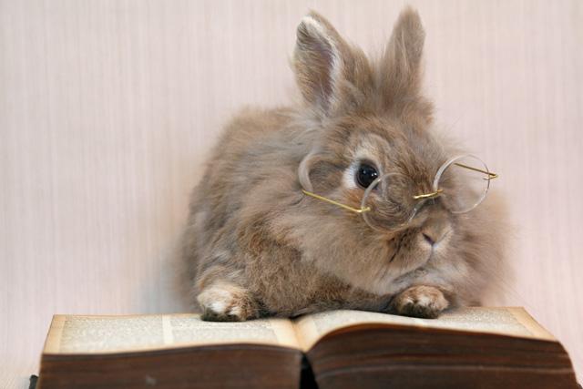 Bunny-bunny-rabbits-30656386-640-427.jpg